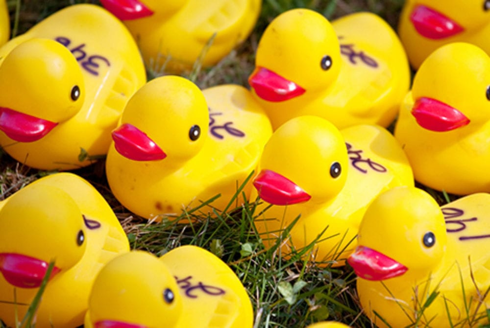 Collection of rubber ducks.
